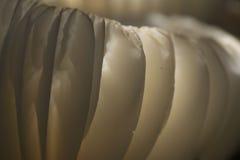 飘渺白色蘑菇特写镜头摘要  库存照片