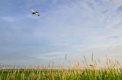 飞机起飞与绿草 免版税库存照片