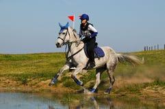 飞溅入横越全国的须越过的水沟的灰色马 免版税图库摄影