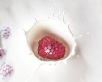 飞溅在奶油的莓特写镜头 库存图片