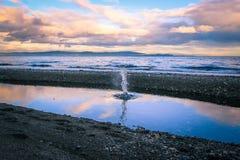 飞溅在水坑外面的水 免版税库存图片
