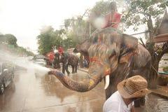 飞溅在Songkran节日的大象水在泰国。 库存照片