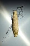 飞溅水的玉米 库存图片