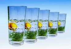 飞溅水在五块玻璃中在蓝色和白色背景 免版税库存照片