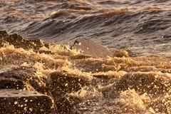 飞溅水的一刹那冻结的平均值移动 库存照片
