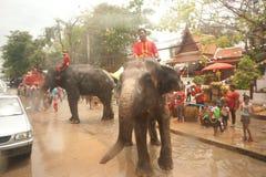 飞溅水的大象在Songkran天在泰国。 免版税库存图片