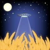 飞碟在玉米田 免版税图库摄影