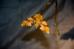 飞蛾或蝴蝶在分支 免版税库存图片