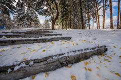 飞行下来从的台阶在用雪盖的公园和叶子 免版税库存照片