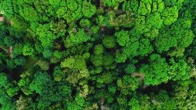 飞行今后上面美丽的绿色森林空中4K跨线桥topview射击的寄生虫 影视素材