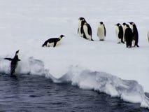 飞行企鹅 免版税库存照片