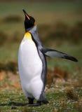 飞行企鹅 免版税库存图片