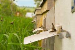 飞行入蜂房的蜂 免版税图库摄影