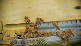 飞行入蜂房的蜂 股票录像