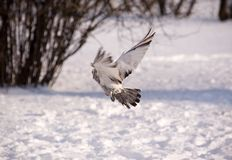 飞行冬天 免版税图库摄影