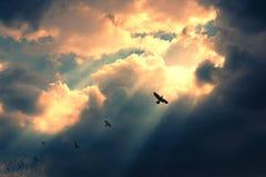 飞行到光的鸟 成功的概念 领导和fe 免版税库存图片