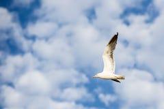 飞行到在蓝天的左边的海鸥与白色云彩 免版税库存图片