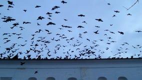 飞行到屋顶的鸟 免版税库存图片