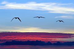 飞行剪影的鸟 免版税库存照片