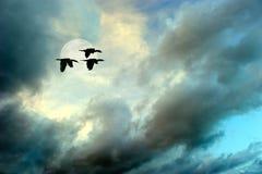 飞行剪影的鸟 免版税图库摄影