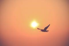 飞行剪影鸟 库存照片
