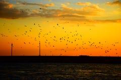 飞行反对日落的鸟 库存照片