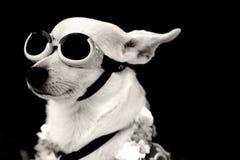 飞行员狗 免版税库存图片