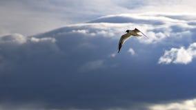 飞行和看在准备好的鸟潜水下 免版税库存照片