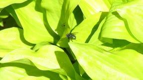 飞行和蚊子在植物 免版税库存照片