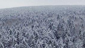 飞行和起飞在冬天森林上降雪的在北部,空中全景 影视素材