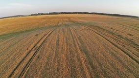 飞行和起飞在麦田,鸟瞰图上 免版税库存照片