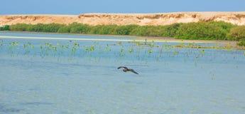 飞行和钓鱼由海边的海鸥有海洋和蓝天的背景 免版税库存图片