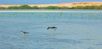 飞行和钓鱼由海边的海鸥有海洋和蓝天的背景 免版税库存照片