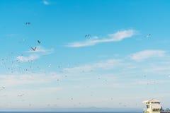 飞行在一个救生员小屋的海鸥在拉霍亚靠岸 免版税图库摄影