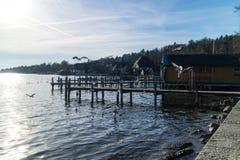 飞行在一只木跳船附近的海鸥 免版税库存照片