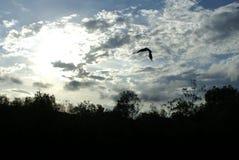 飞行在一条内地运河的鱼鹰 免版税库存图片