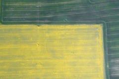 飞行在与寄生虫的油菜籽领域 Landsacape 日域热夏天麦子 图库摄影