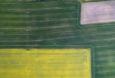 飞行在与寄生虫的油菜籽领域 Landsacape 日域热夏天麦子 免版税库存照片