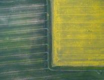 飞行在与寄生虫的油菜籽领域 Landsacape 日域热夏天麦子 库存照片
