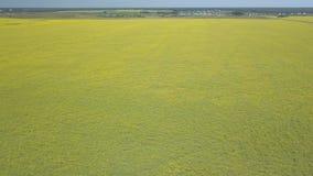飞行在与黄色花的绿色领域 股票视频