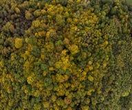 飞行在五颜六色的树梢秋天树上 森林法国 免版税图库摄影