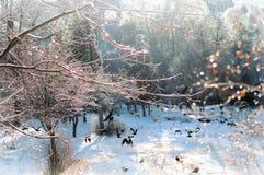 飞行在公园的黑乌鸦 图库摄影