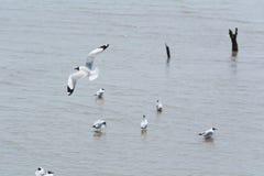 飞行在其他的海鸥 免版税库存照片