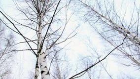 飞行在冬天森林的民用飞机 股票录像