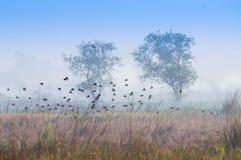 飞行在冬天薄雾的鸟 免版税图库摄影