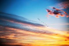 飞行在剧烈的蓝天,日落射击的鸟 免版税图库摄影