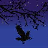 飞行在可怕万圣夜夜树传染媒介的黑暗的乌鸦鸟 库存图片