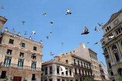 飞行在哈瓦那 库存图片