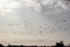 飞行在圈子的鸟 免版税库存照片
