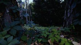 飞行在地面上的森林里 股票视频